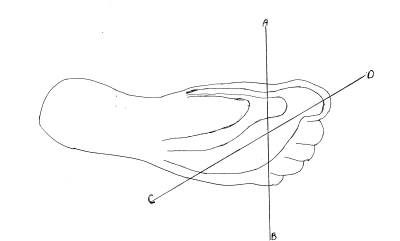 Contour Map of the Foot